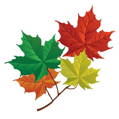Canadian Forests maple leaf
